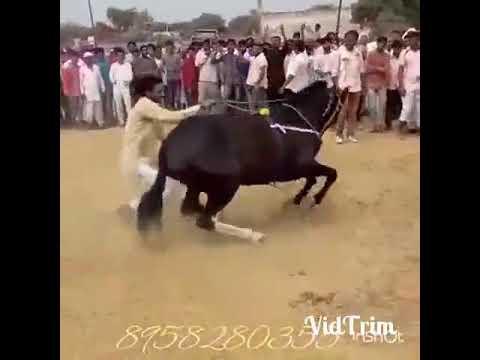 Конь  танцует под музыку!😂😂