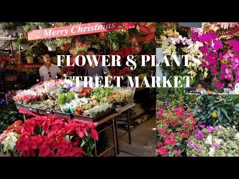 Hong Kong's Flower Market / Ultra HD 4K - Prince Edward Flower Street Market