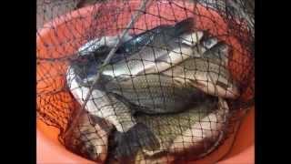 Клевая рыбалка на крупного карася