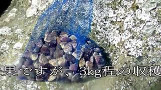 2017年4月14日に、茨城県大洗町の大洗第二サンビーチに潮干狩りをして参...