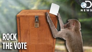 Are We The Only Species That Votes?