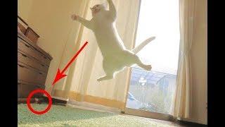 Коты прыгают неудачно / Подборка 2018, Приколы с котами, Cats Jumps Fail Funny