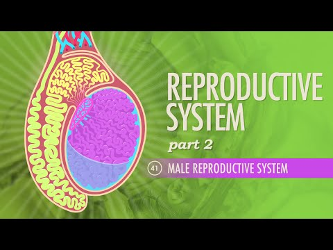 essay on female reproductive system
