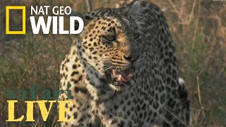 Safari Live - Day 47 | Nat Geo WILD thumbnail