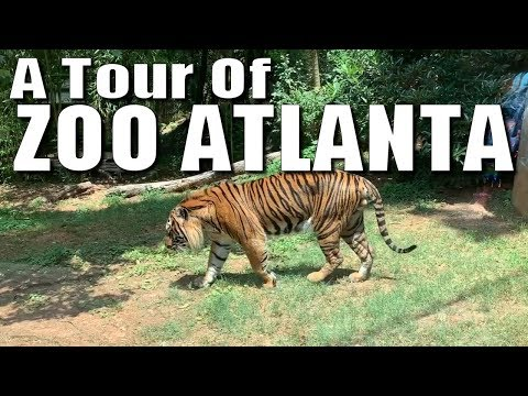 A Tour Of Zoo Atlanta
