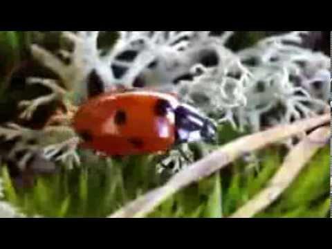 знакомство с насекомыми