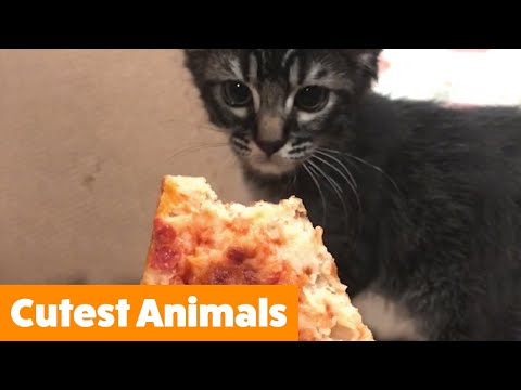 Funniest Pets Of The Week | Funny Pet Videos