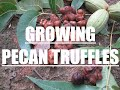 Growing Truffles on Pecan Trees Experiment Part I
