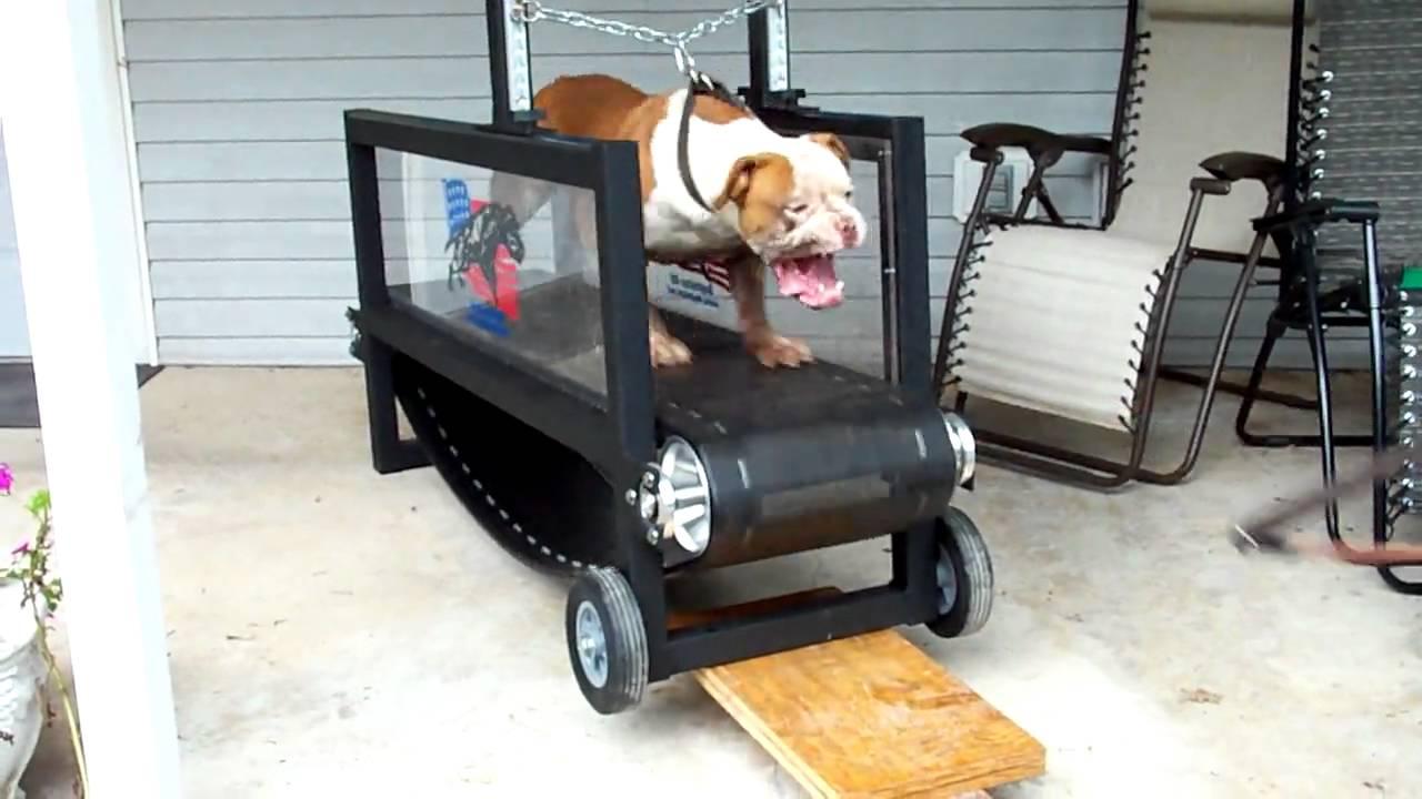 Dog Trotter For Sale