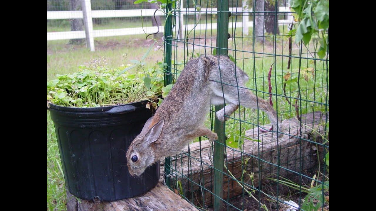 25 Beautiful Deer Fence Ideas On Garden To Keep