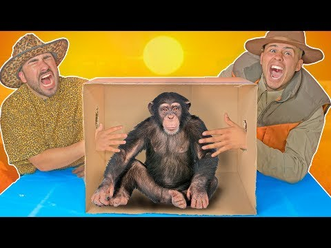Whats in the Box CHALLENGE! LIVE ANIMALS