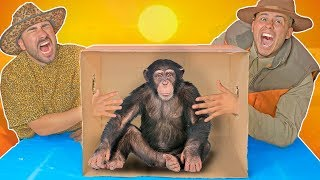 Whats In The Box CHALLENGE! (LIVE ANIMALS)