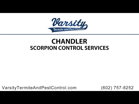 Chandler Scorpion Control Services by Varsity