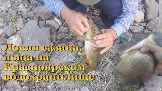 Ловля сазана леща на Красноярском водохранилище Удачная рыбалка