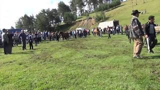 probe de cai intorsura buzaului