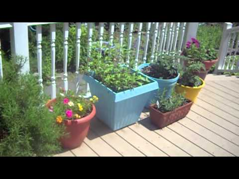 """Deck Decorating On A """"Dime"""""""