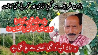 Vegetable farming in Pakistan // ghiya tori ki kasht // karele ki kasht // modern vegetable farming