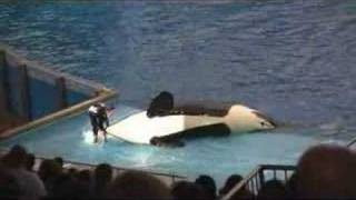 Sea World Shamu Fail