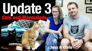 Cole And Marmalade Legal Update 3