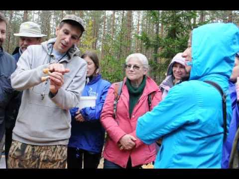 грибы лесные шампиньоны колпаки