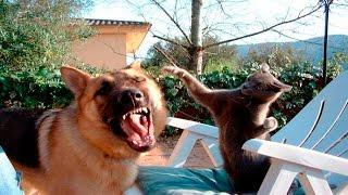 Смешные Кошки и Животные - Кошки Против Животных - Смешные Животные Октябрь 2016 ( Выпуск #4 )