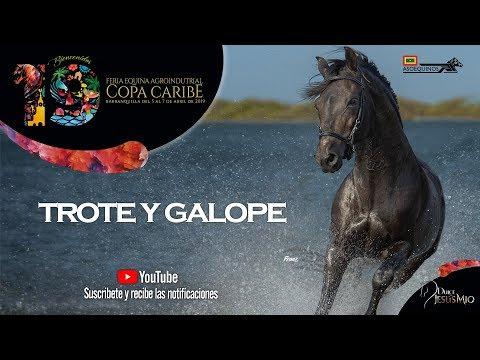 YEGUAS MAYORES A 78 -   TROTE Y GALOPE - COPA CARIBE BARRANQUILLA 2019