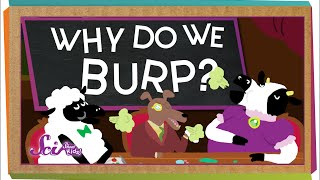 Why Do We Burp?