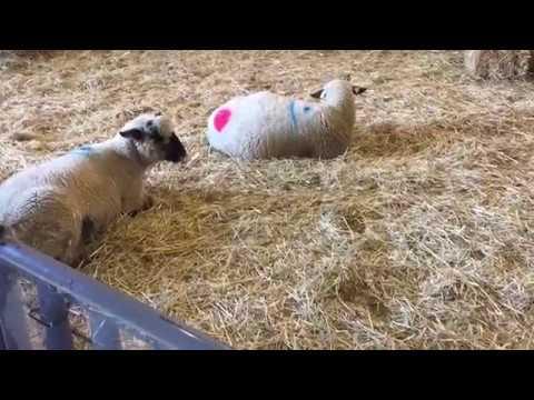 Houston Rodeo 2019 - Houston Livestock Show