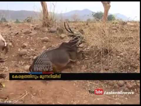 Cattle dying in southern karnataka as drought deepens