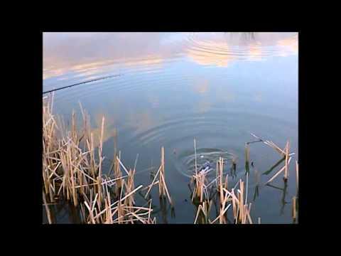 Wrightington Fisheries :: 3 :: 31/03/12 ::