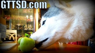 Easy Apple Chips For Dogs | Homemade Dog Treats Recipe | Snacks With The Snow Dogs 27