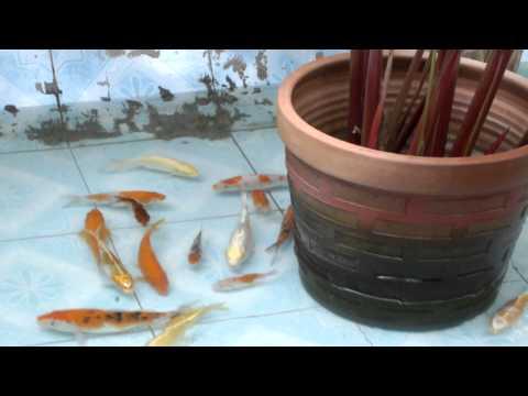 น้ำตกบ่อปลาคราฟ