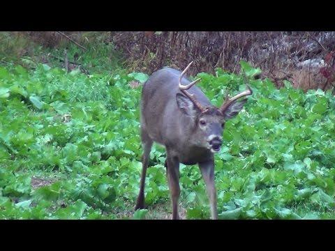 Archery Deer Hunting Pennsylvania 2014 November 7th-8th