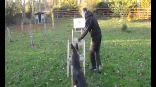 Bedfordshire Dog Centre ~ Heel Work & Agility