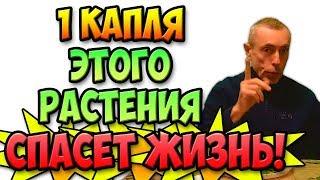 1 КАПЛЯ ЭТОГО РАСТЕНИЯ СПАСЕТ ЖИЗНЬ! Виталий Остр...