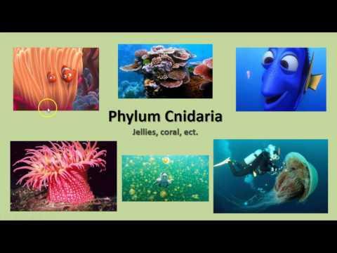 Unit 14 - Sponges & Cnidaria