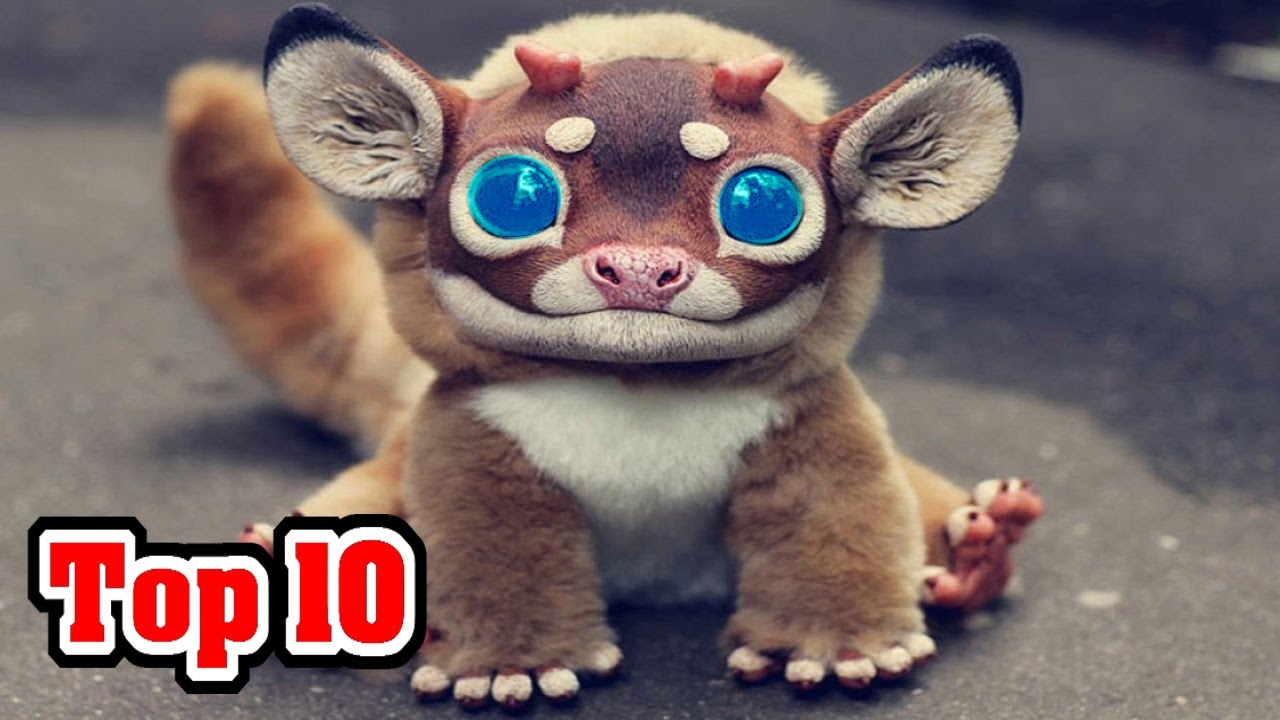 Top 10 Most Amazing Animal Hybrids From Top10archive