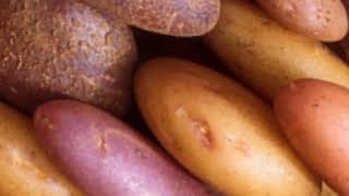Potato mop-top virus (PMTV) | Potatoes | Symptoms | Disease cycle | Management