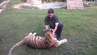 Video Tiger Tickle Time download MP3, 3GP, MP4, WEBM, AVI, FLV Mei 2018