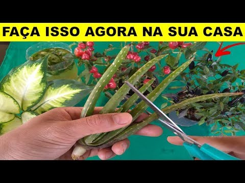 Abudo fácil e barato para todos tipos de plantas (natural fertilizer for plants)