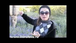 Наташа Королева в гранд каньон блог  mail ru  04 2010