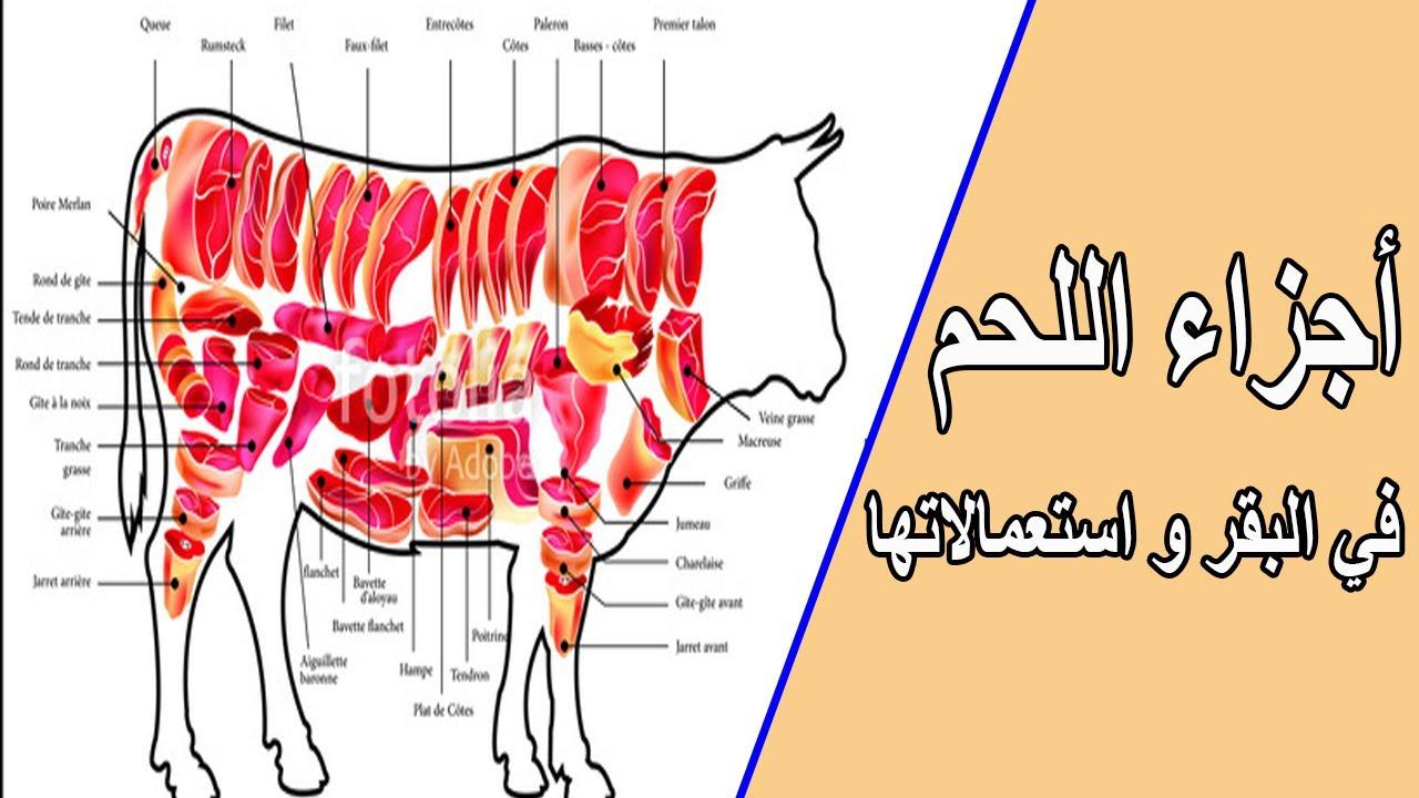أجزاء اللحم في البقر و استعمالاتها Youtube