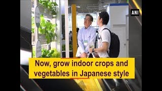 Now, grow indoor crops and vegetables in Japanese style - #ANI News