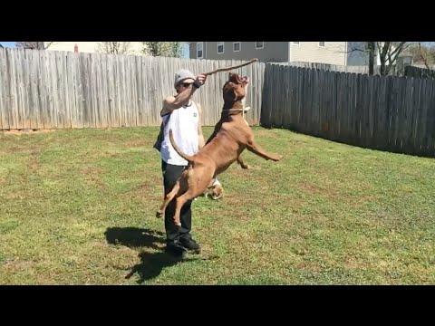 SLOW MO DOG JUMPS AND BIKE TRAILS