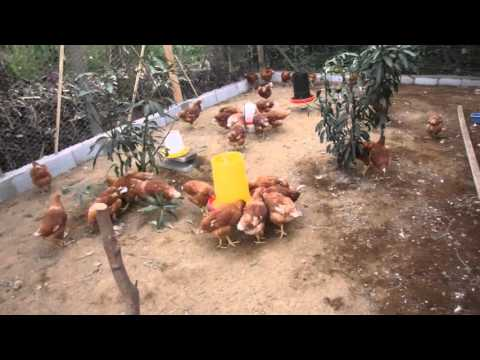 Day 9 Construction of the Free Range Organic Chicken Farm in Guatemala for a Poor Family