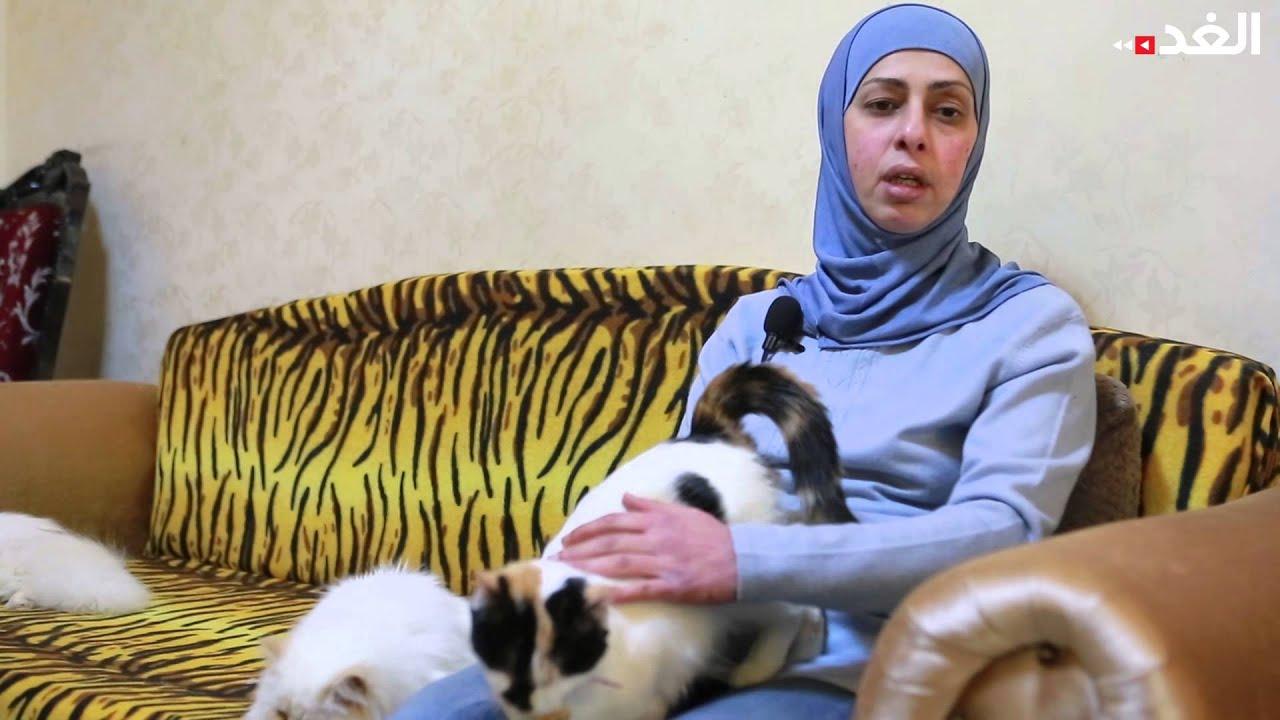 de6751690fd82 البداوي تحتضن مئات من القطط منذ 19 عاما في منزلها - YouTube