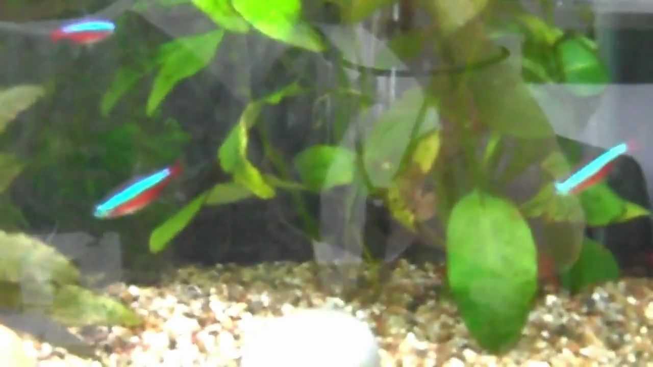 Vissen zwemmen rond in 25 liter aquarium youtube for Aquarium rond