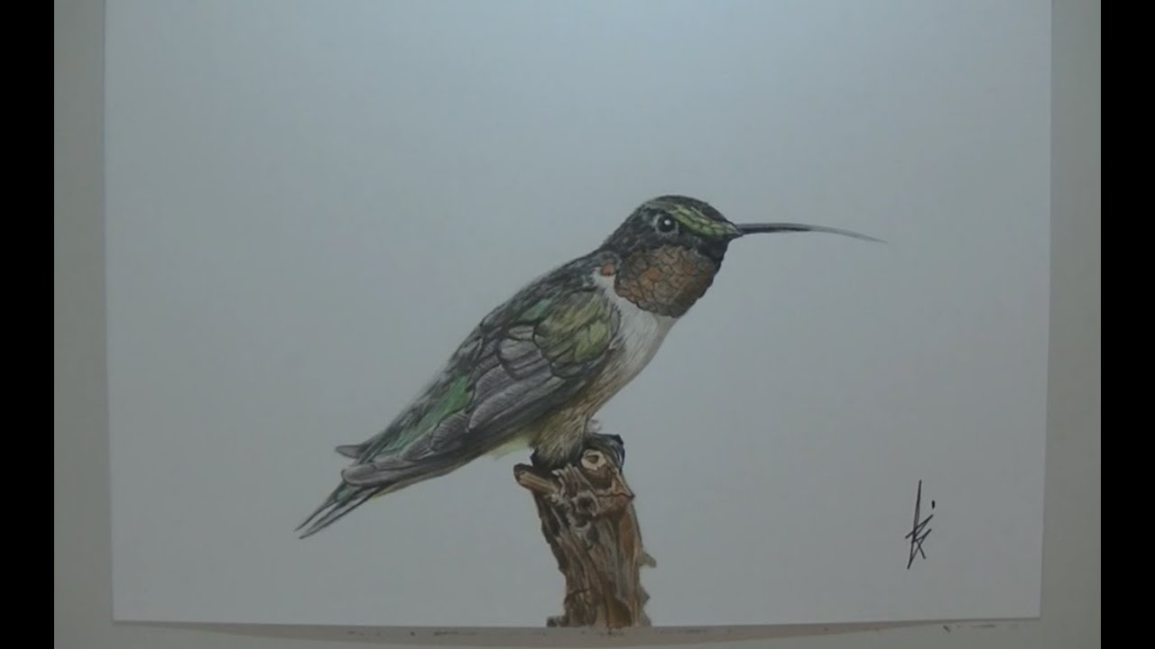 Speed drawing Hummingbird - realistic art - YouTube