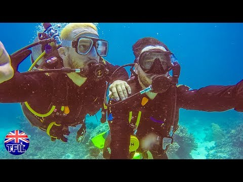 SCUBA DIVING w/ SHARKS AND SEA TURTLES at GREAT BARRIER REEF!