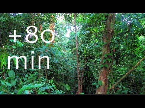 Rainforest - Birdsong at Sunrise - 1,5HOUR Nature Sounds #6, Costa Rica Soundscapes